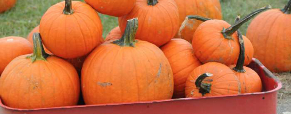 Pumpkin Picking Long Island Exit