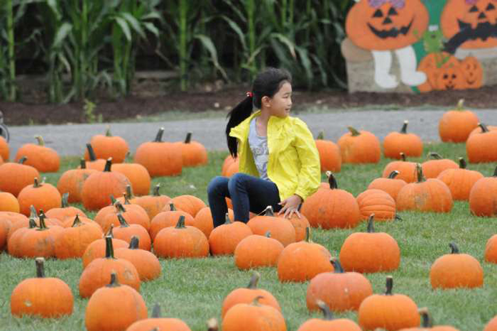 pumpkin patch long island